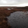 Ditch Dam5